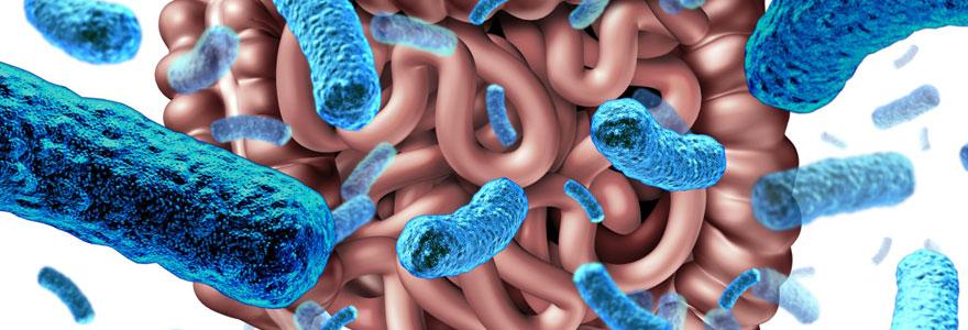 Perdre du poids avec les probiotiques